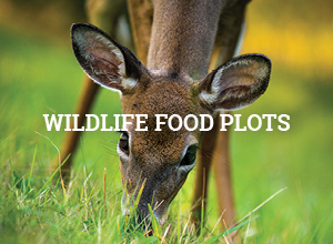 Wildlife Food Plots