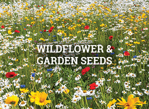 Wildflower and Garden Seeds