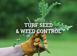 Turf Seed and Weed Control