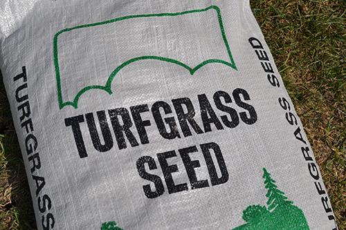 Turf Seed